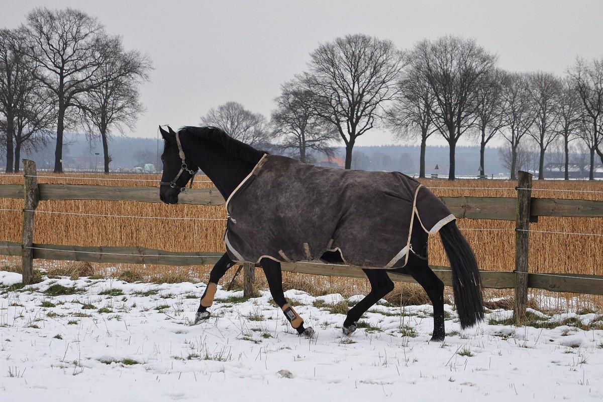 caballero in de sneeuw