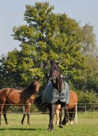 paard in galop staande foto